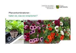 Pflanzenkombinationen - halten sie, was sie versprechen?
