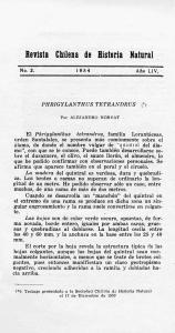 PHRIGYLANTHUS TETRANDRUS (*) Por ALEJANDRO HORVAT