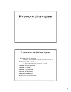 Physiology of urinary system