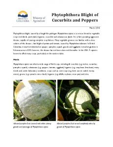 Phytophthora Blight of Cucurbits and Peppers