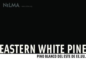 PINO BLANCO DEL ESTE DE EE.UU