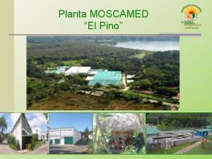 Planta MOSCAMED El Pino