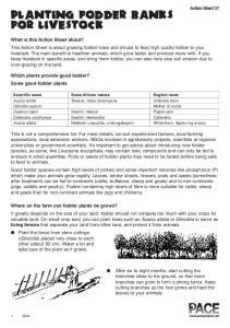 planting fodder banks for livestock