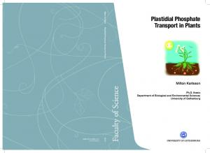 Plastidial Phosphate Transport in Plants