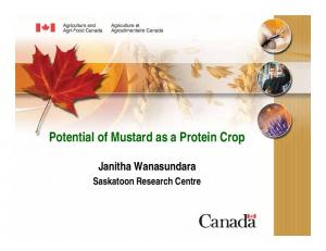 Potential of Mustard as a Protein Crop