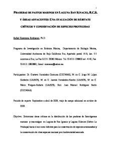 PRADERAS DE PASTOS MARINOS EN LAGUNA SAN IGNACIO, B.C.S