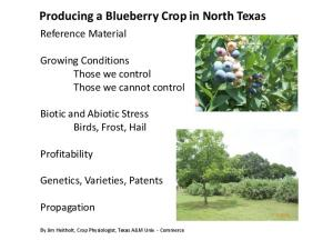 Producing a Blueberry Crop in North Texas