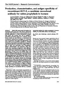 Production, characterization, and antigen specificity of recombinant , a candidate monoclonal antibody for rabies prophylaxis in humans