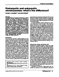 Prokaryotic and eukaryotic chromosomes: what's the difference?