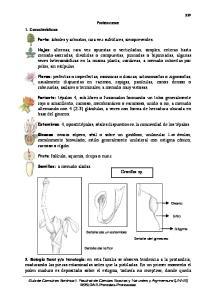 Proteaceae. Detalle de la flor