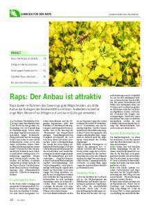 Raps: Der Anbau ist attraktiv