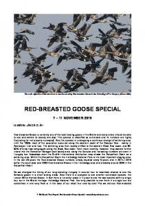 RED-BREASTED GOOSE SPECIAL