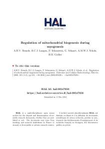 Regulation of mitochondrial biogenesis during myogenesis