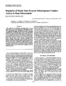 Regulation of Steady State Pyruvate Dehydrogenase Complex