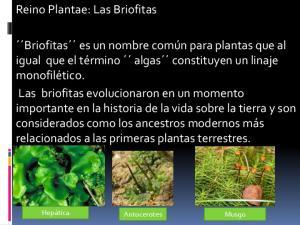 Reino Plantae: Las Briofitas