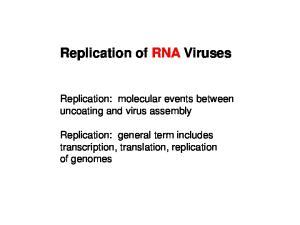 Replication of RNA Viruses