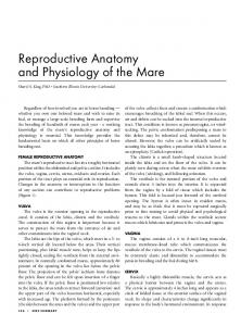 Reproductive Anatomy and Physiology of the Mare