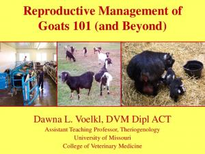 Reproductive Management of Goats 101 (and Beyond)