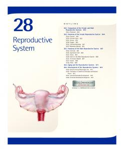 Reproductive System Comparison of the Female and Male Reproductive Systems a Perineum 843