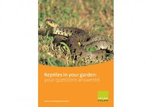Reptiles in your garden: your questions answered