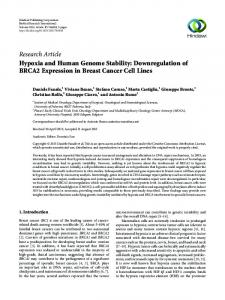 Research Article Hypoxia and Human Genome Stability: Downregulation of BRCA2 Expression in Breast Cancer Cell Lines