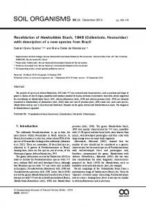 Revalidation of Handschinia Stach, 1949 (Collembola, Neanuridae) with description of a new species from Brazil