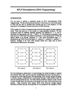 RFLP Electrophoresis (DNA Fingerprinting)