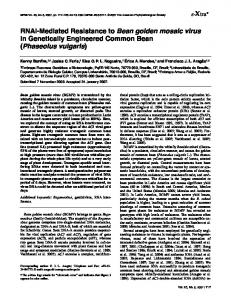 RNAi-Mediated Resistance to Bean golden mosaic virus in Genetically Engineered Common Bean (Phaseolus vulgaris)