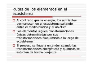 Rutas de los elementos en el ecosistema