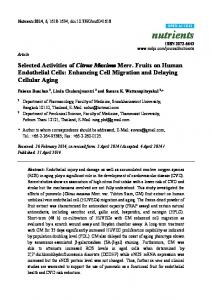 Selected Activities of Citrus Maxima Merr. Fruits on Human Endothelial Cells: Enhancing Cell Migration and Delaying Cellular Aging