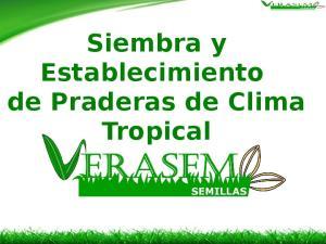 Siembra y Establecimiento de Praderas de Clima Tropical