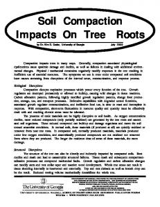 Soil Compaction Impacts On Tree Roots
