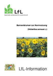 Sonnenblumen zur Kornnutzung (Helianthus annuus L.)
