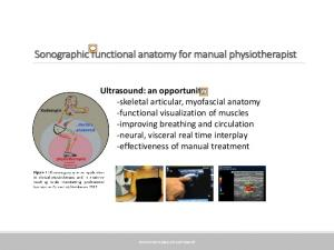 Sonographic functional anatomy for manual physiotherapist