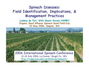 Spinach Diseases: Field Identification, Implications, & Management Practices