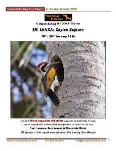 SRI LANKA: Ceylon Sojourn