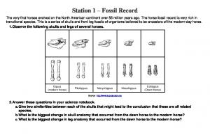Station 1 Fossil Record