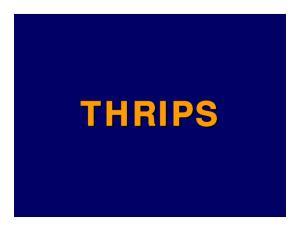 Status of Scirtothrips. dorsalis, Chilli thrips