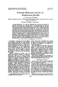 Streptococcus faecalis