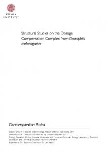 Structural Studies on the Dosage Compensation Complex from Drosophila melanogaster