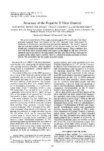 Structure of the Hepatitis B Virus Genome