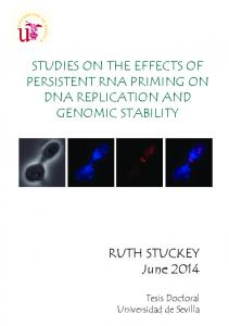 STUDIES ON THE EFFECTS OF PERSISTENT RNA PRIMING ON DNA REPLICATION AND GENOMIC STABILITY