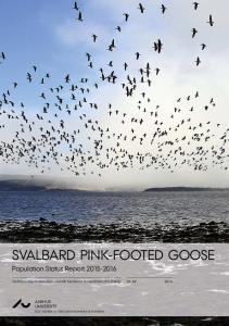 SVALBARD PINK-FOOTED GOOSE
