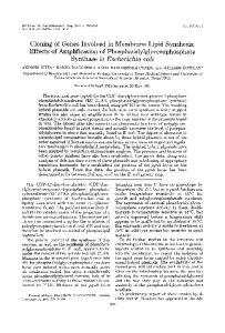 Synthase in Escherichia coli