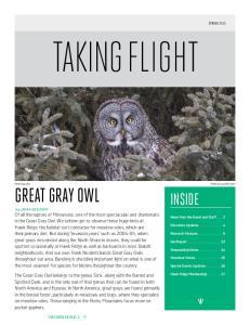 TAKING FLIGHT. Great gray owl INSIDE