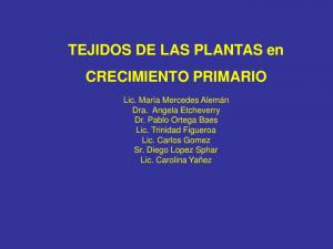 TEJIDOS DE LAS PLANTAS en CRECIMIENTO PRIMARIO