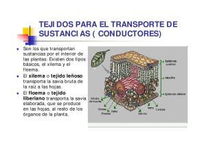 TEJIDOS PARA EL TRANSPORTE DE SUSTANCIAS ( CONDUCTORES)