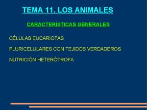 TEMA 11. LOS ANIMALES