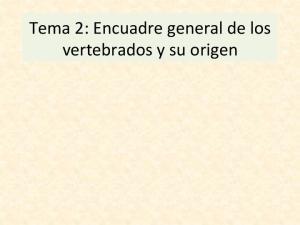 Tema 2: Encuadre general de los vertebrados y su origen