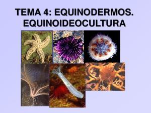 TEMA 4: EQUINODERMOS. EQUINOIDEOCULTURA